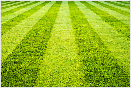 Lawn mowing services in Auckland